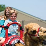 Kids enjoying a camel ride.